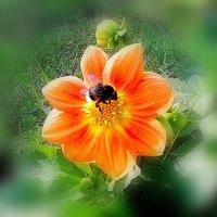 Цветок и шмель. :: Oleg4618 Шутченко