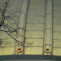 Ветка и купол :: Владимир Гилясев