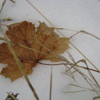 Осенний лист :: Анатолий