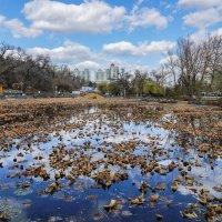 Листья плавают в пруду :: Денис Антонюк