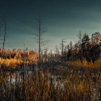 топь да болота :: Аркадий Алямовский