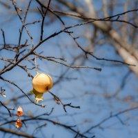 Осенний янтарь :: Наталья Киселёва