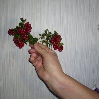 ягода :: Геннадий Евтушенко