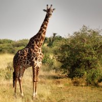 Good morning!!! in Tanzanian way) :: YAROSLAV SMIRNOFF