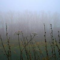 За завесою тумана спит осенний лес... :: Евгений Юрков