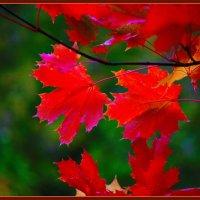 Осенний клён :: М. Дерксен Derksen