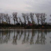 ...Рощи голы, от воды туман и сырость... :: Елена Даньшина