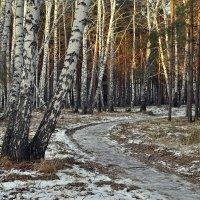 Начало ноября :: Дмитрий Конев