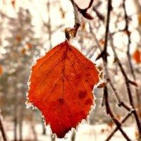 Один — на ветке обнаженной,трепещет запоздалый лист :: galina tihonova