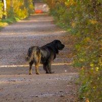 Тёмная собачка :: Aнна Зарубина