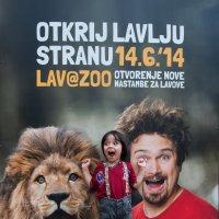Открыл в себе льва :: Olga Melnik
