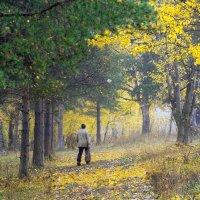 В Роще памяти :: Валерий Талашов