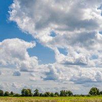 Солнечное сено :: Elena Agaeva
