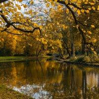 Осень золотая :: Alexander