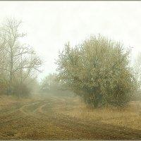 Туман... :: Александр Смольников