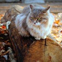 осенние думы кота... :: Татьяна Тимохина