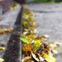 Осенняя :: Галия Дмитриева