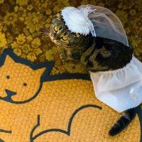 свадебный кот :: Михаил Решетников