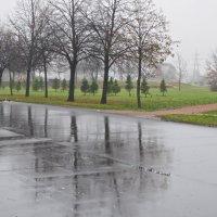 здесь у нас туманы и дожди :: Елена