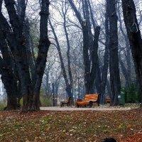 Сиреневый туман Фото №1 :: Владимир Бровко
