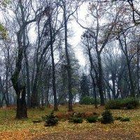 Сиреневый туман Фото №2 :: Владимир Бровко