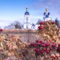 Последние яркие краски перед зимой:) :: Alllen Polunina