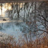 Немного солнца в холодной воде... :: Rimma Telnova