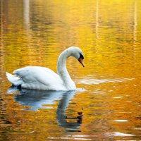 Grace and Beauty :: Vadim Raskin