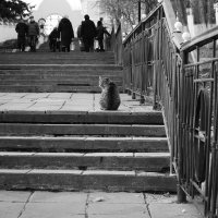 Одиночество... :: Светлана Глушкова