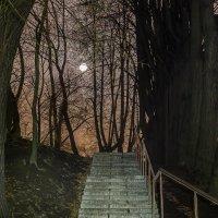 В вечернем парке. :: Эдуард Пиолий