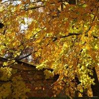 Осень во дворе :: Валерий Талашов