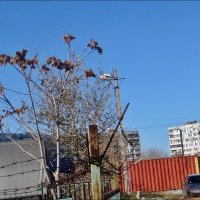 Осень за колючей проволокой :: Нина Корешкова