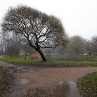 В парке 9-го января... :: Владимир Питерский