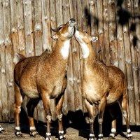 Папарацци в Зоопарке Фото №1 :: Владимир Бровко