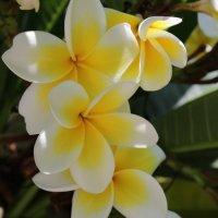 любимые цветочки :: Лолита Арндт