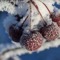 Морозно. :: Kassen Kussulbaev
