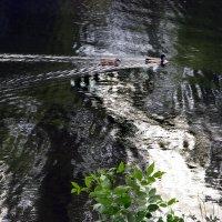 утками по воде писано :: Irina