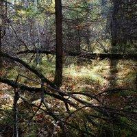 В лесной чаще. :: Rafael