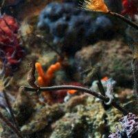 Океанариум в Барселоне :: Валерия Скиба
