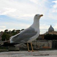 птица Рима. :: Татьяна Тимохина