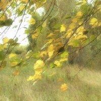 Осенний ветер :: Александр Акилов