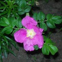 Мир цветов :: Инна Буяновская