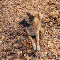 Осенняя прогулка :: Ирина