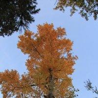 Осень золотая. :: Андрей
