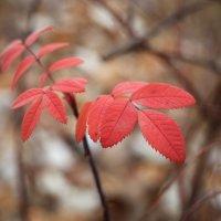Осенние листья :: Татьяна Курамшина