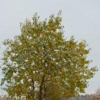 дерево :: mitro72 цимбал