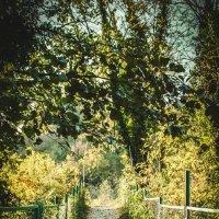 Среди деревьев. :: Альбина Дорохина