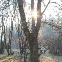 Немного солнца в холодную осень :: Larisa
