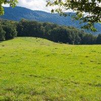 Пастбище в Езерских горах, Чехия :: Valeria Ashhab