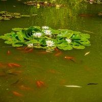 Озеро в парке :: Александр Хорошилов